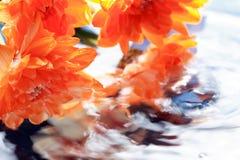 Bloemen hierboven - water Royalty-vrije Stock Foto