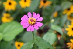 Bloemen houston texas stock afbeeldingen