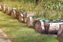 Bloemen in houten potten Royalty-vrije Stock Fotografie