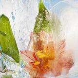 Bloemen in Ijs worden bevroren dat Royalty-vrije Stock Foto's