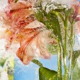 Bloemen in Ijs worden bevroren dat Stock Afbeelding