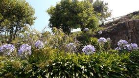 Bloemen in Ile DE Brehat, de PAN van Bretagne Frankrijk stock videobeelden