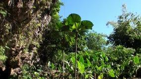 Bloemen, installaties en bomen in Franse Polynesia op het Eiland van Tahiti stock video