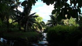 Bloemen, installaties en bomen in Franse Polynesia op het Eiland van Tahiti stock footage