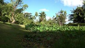 Bloemen, installaties en bomen in Franse Polynesia op het Eiland van Tahiti stock videobeelden