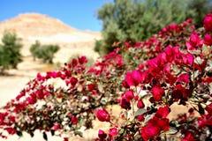 Bloemen in Isra?lische Negev-Woestijn stock foto's