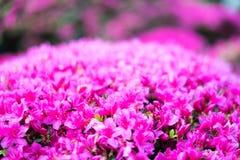 Bloemen in Japanse Theetuin royalty-vrije stock foto