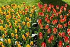 Bloemen in Keukenhof-park, Lisse Stock Afbeelding