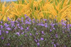 Bloemen in Koh Samui Airport Stock Foto's