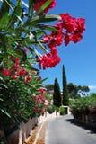 Bloemen langs de straat in Mediterrane stad Royalty-vrije Stock Foto