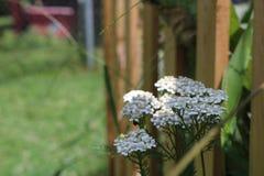Bloemen langs houten omheining Stock Fotografie