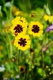 Bloemen in Lentetijd royalty-vrije stock afbeelding
