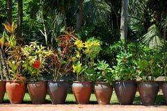 Bloemen in Luang Prabang stock foto