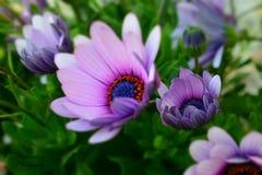 Bloemen in macro Stock Foto's