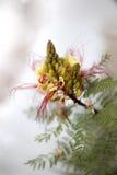 Bloemen macroaard Royalty-vrije Stock Afbeeldingen