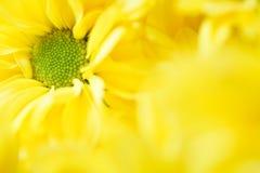 Bloemen malplaatje Stock Afbeeldingen