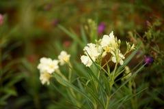 Bloemen met abstract licht en bokeh voor achtergrond Royalty-vrije Stock Foto
