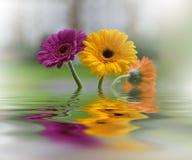 Bloemen met bezinning Zeep, handdoek en bloemensneeuwklokjes Royalty-vrije Stock Afbeelding