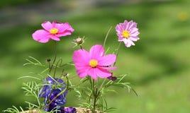 Bloemen met bokehachtergrond Royalty-vrije Stock Foto's