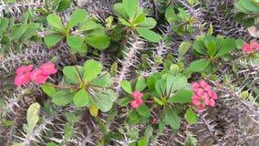 Bloemen met doornen stock fotografie