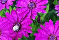 Bloemen met een slak Stock Fotografie