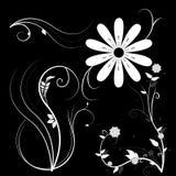Bloemen met een zwarte achtergrond Stock Fotografie