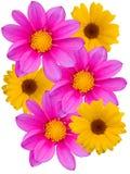 Bloemen met gele violette bloemblaadjes Royalty-vrije Stock Foto's
