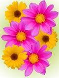 Bloemen met gele violette bloemblaadjes Royalty-vrije Stock Foto