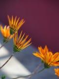 Bloemen met gerichte bloemblaadjes Stock Afbeeldingen