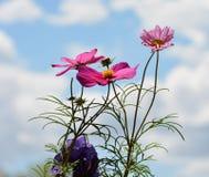 Bloemen met hemelachtergrond Royalty-vrije Stock Foto's