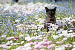 Bloemen met Kat Royalty-vrije Stock Afbeeldingen