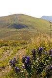 Bloemen met landschap. royalty-vrije stock afbeelding