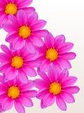 Bloemen met lilac bloemblaadjes Stock Foto's