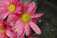 Bloemen met regendruppels Royalty-vrije Stock Foto's