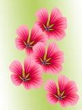 Bloemen met rode bloemblaadjes Royalty-vrije Stock Afbeeldingen