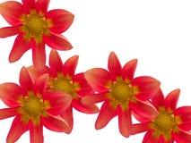 Bloemen met rode bloemblaadjes Royalty-vrije Stock Afbeelding