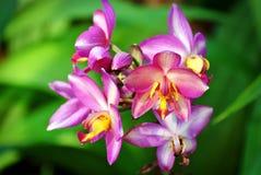 Bloemen met Roze en Gele Bloemblaadjes op Verse Groene Bladeren Vage Achtergrond royalty-vrije stock afbeeldingen