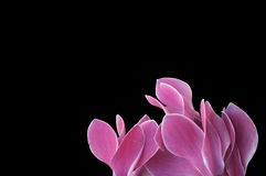 Bloemen met ruimte Royalty-vrije Stock Foto