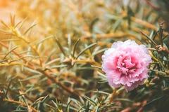Bloemen met uitstekende toon in de tuin Stock Foto's