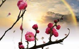 Bloemen met verdriet en mooie regenbogen, enkel net royalty-vrije stock fotografie