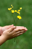 Bloemen in mijn handen Stock Foto's