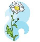 Bloemen mooie kamillekaart Het kan voor prestaties van het ontwerpwerk noodzakelijk zijn stock illustratie