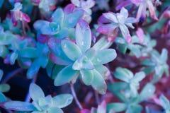 Bloemen na de regen stock afbeelding