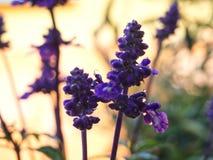 Bloemen na de regen royalty-vrije stock foto