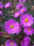 Bloemen na Regen royalty-vrije stock afbeeldingen