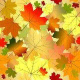 Bloemen naadloos de herfstpatroon Stock Foto