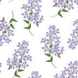 Bloemen naadloos patroon De achtergrond van de bloem Bloemen naadloze tekst Royalty-vrije Stock Foto