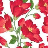 Bloemen naadloos patroon De achtergrond van de bloem Bloemen textuur Royalty-vrije Stock Fotografie