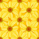 Bloemen naadloos patroon - madeliefje Stock Afbeeldingen