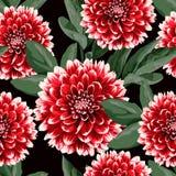 Bloemen naadloos patroon met de hand getrokken rode bloemen en de bladeren van de dahlia'sherfst Illustratie voor textiel royalty-vrije stock fotografie